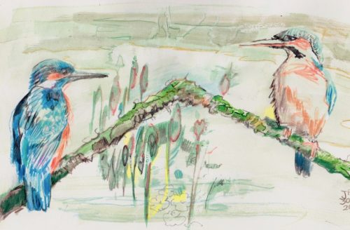 "Daily Creative by Jane Adams ""Kingfisher"""